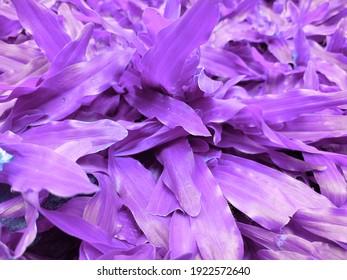 Unique purple grass and a very attractive pattern