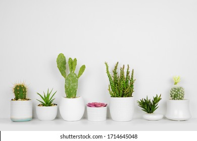 Unique set of house plants on a shelf. Succulents and cacti in a row. Side view on white shelf against a white wall.