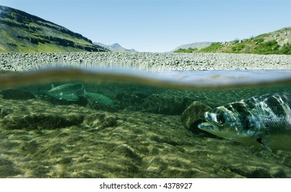 Unique shot of a fishing river underwater and landscape above
