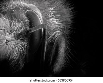 Unique shot frame of bumble bee under scanning electron microscope