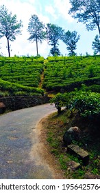 Unique shot of a tiny road running through a scenic tea state in Sri Lanka.