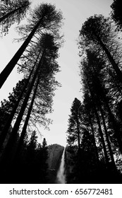 Unique shot of Yosemite falls with tall trees around it