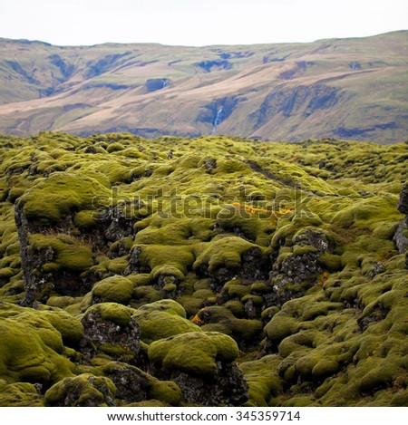 Unique Surface Iceland Color Moss Really Stock Photo Edit Now