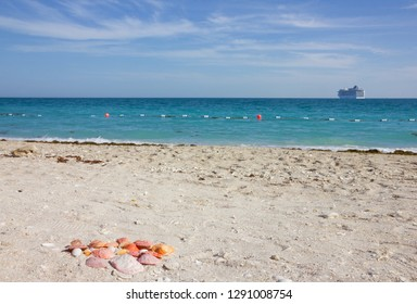 United Arab Emirates (UAE), cruise ship and shells on sea beach of Sir Bani Yas island, Abu Dhabi, Persian Gulf