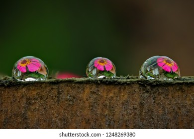 The United Colors of Dew