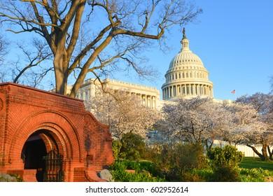 United States Capitol Building in springtime - Washington DC USA