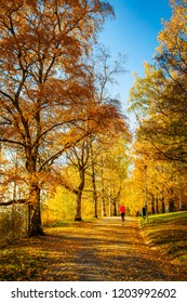An unknown athletic woman running in an autumn park in Finland. The trees are yellow and the sun shines.