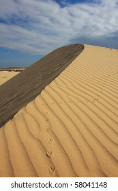 An unknown bird climbed a round shaped sand dune , leaving behind a clear trace of its hike. Vietnam.