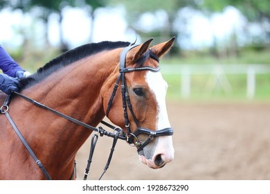 Unknown contestant rides at dressage horse event in riding ground. Head shot close up of a dressage horse during competition event