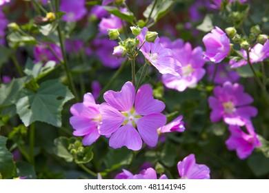 Unknown flowers - Shutterstock ID 481141945