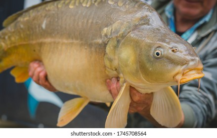 Unknown man holding a big fish in his hands as a trophy. Big ugly large head of a fish caught in a lake.