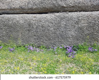 Unknown tiny purple flowers on the grass front of the stone wall