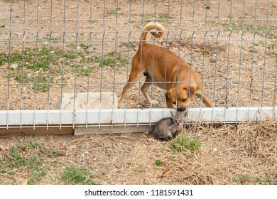 Unlikely friends/Baby dog getting to know a cat cub through a fence that separates a countryside yard with domestic animals from the street.