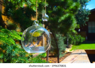 unlit candles in glass baubles hanging from pine trees in a garden, on a sunny day