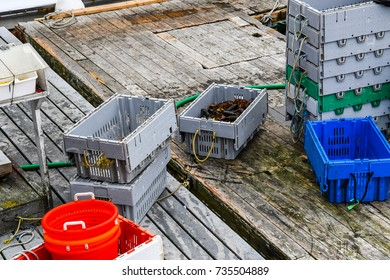 Unloading docks at the wharf with lobstering equipment and a crate of fresh live lobsters