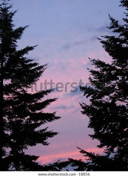 An unobtrusive sun set viewed through two conifers.