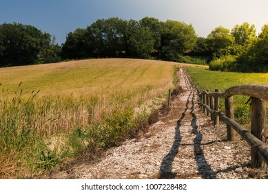 Unpaved road across cereal field in a sunny day. Italy