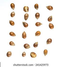 Unpopped popcorn kernel isolated on white background