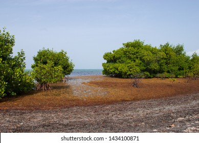 Unprecedented amounts of sargassum seaweed washed up on the shore of the Cayman Islands. The quantities of this plant that have reached problematic levels in the Caribbean are due to climate change