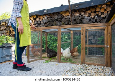 Unrecognisable woman feeding her free range chickens. Egg laying hens and young female farmer. Healthy organic eating lifestyle.