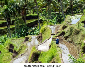 Unrecognizable agricultural worker climbing among Balinese rice terraces at Tegallalang near Ubud