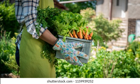 Unrecognizable female farmer holding crate full of freshly harvested vegetables in her garden. Homegrown bio produce concept. Sustainable living.