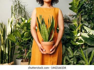 Unrecognizable florist woman holding a pot with sansevieria plant - Shutterstock ID 1442166104