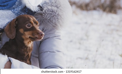 Unrecognizable person holding small tiny daschund dog puppy while snow is snowing