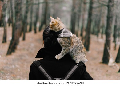 Unrecognizable woman with cute cat on her shoulder walking in the forest, rear view.