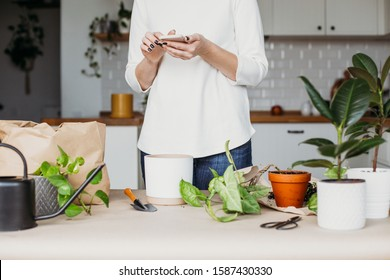 Unrecognizable woman transplanting houseplants kitchen on background. Searching information about houseplants care in phone