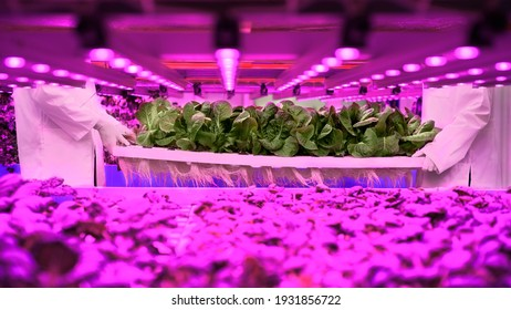 Unrecognizable workers on aquaponic farm, sustainable business.