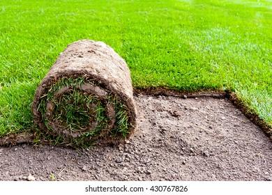 unrolling new grass roll