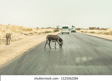 an unsafe animal crossing during the running traffic on the road