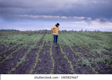 Unsatisfied farmer standing in corn field with lot of weed in spring