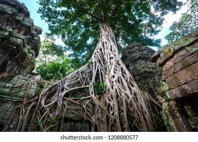 Unseen The root is breaks through the temple.Amazing Stone castles in Khmer empire,Hidden temple Ta prohm near angor wat in siem reap(Combodia).
