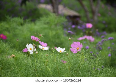 Unselected focus of the flowers on the foreground with Blur background of the forest with the hut.