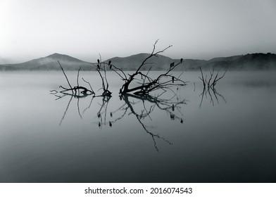 Unsplash leafless tree on body of water photo