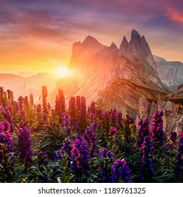Unsurpassed sunrise in the Dolomites Alps. Odle mountain range, Seceda peak between colorful clouds during sunrise, Val Gardena in Dolomite. Italy. Majestic Furchetta peak with flowers under sunlight