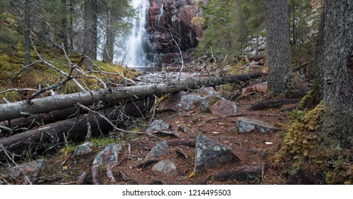 Untouched coniferous forest in sweden with waterfall in the background
