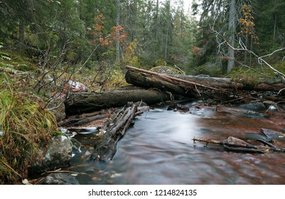 Untouched natural river running through forest in autumn, dalarna, sweden