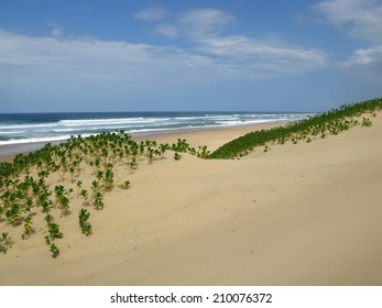 Untouched sand dunes in Sodwana Bay, South Africa