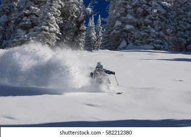 Untracked Powder Skiing