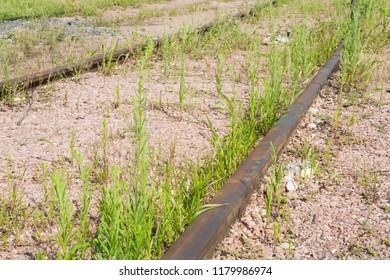 An unused railway line with weeds growing between the tracks.