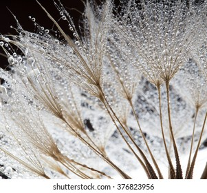Unusual abstract macro photo. Plant's seeds with water drops. The unusual composition