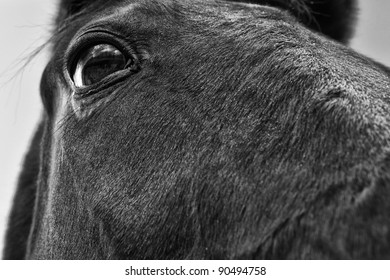 An unusual, almost comical, equestrian portrait shot at extreme close up