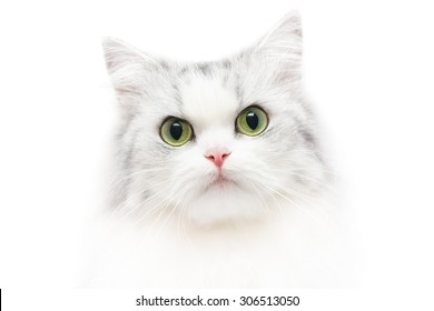 Unusual close-up cat portrait, white background, shallow DOF