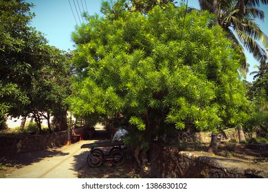 unusual colerful tree in the fort