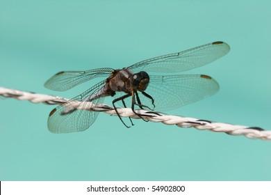 Techno Dragonfly Isolated Stock Illustration - Royalty Free Stock