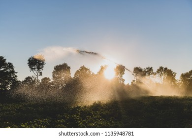 A unusual dry summer makes watering the fields a daily task for farmers in Denmark. On this picture a rain gun supplies a potato field with some water during sunset.