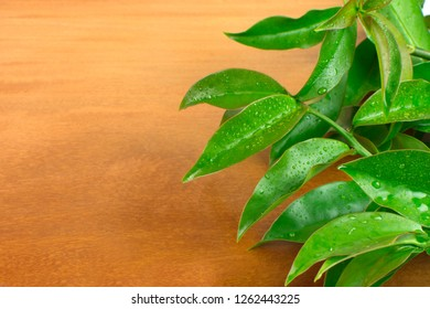 Unusual edible plant Pereskia aculeata, called in Brazil as ora-pro-nóbis in wood background on the side of the frame